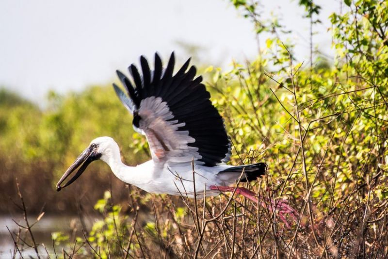Birds Sanctuary ,  Prek Toal Full Day Tour