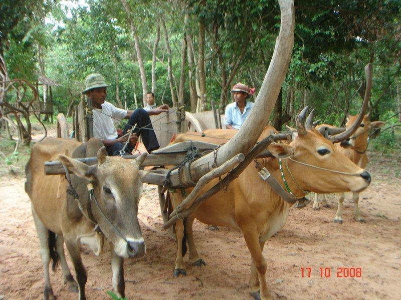 Cambodia Highlight Tours